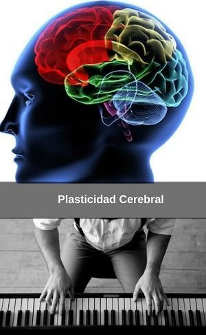 Brain Plasticity, a new scientific learning approach
